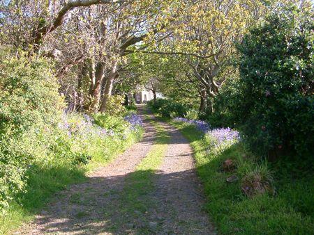 sunlit lane to Canna House