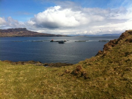 View of the salmon farm from high ground on Muck