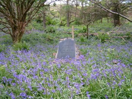 John's gravestone among bluebells in the birch wood